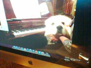 Skype dog