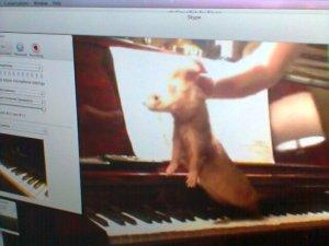 Skype ferret