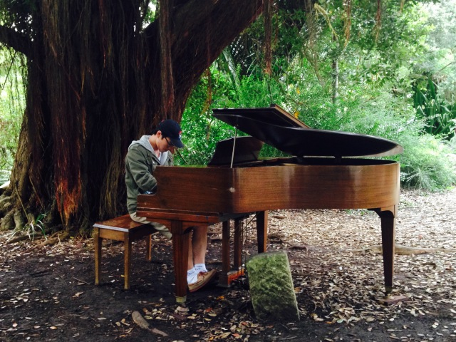 brown grand piano under large tree