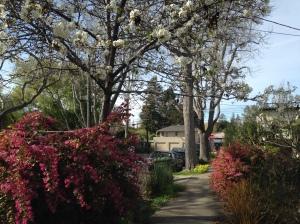 Berkeley near Spring